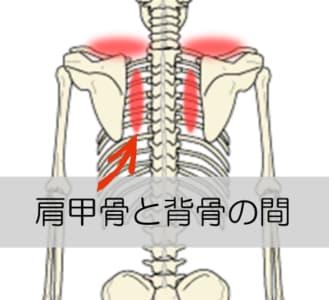 肩甲骨周辺