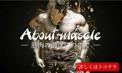 筋肉の働きについて
