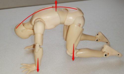 脊柱起立筋のストレッチ