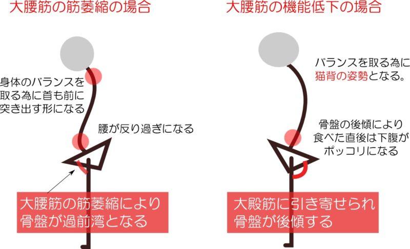 大腰筋の役割