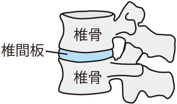 椎間板の説明